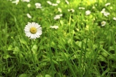 Using lawn substitutes for your yard