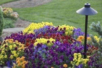 annuals garden