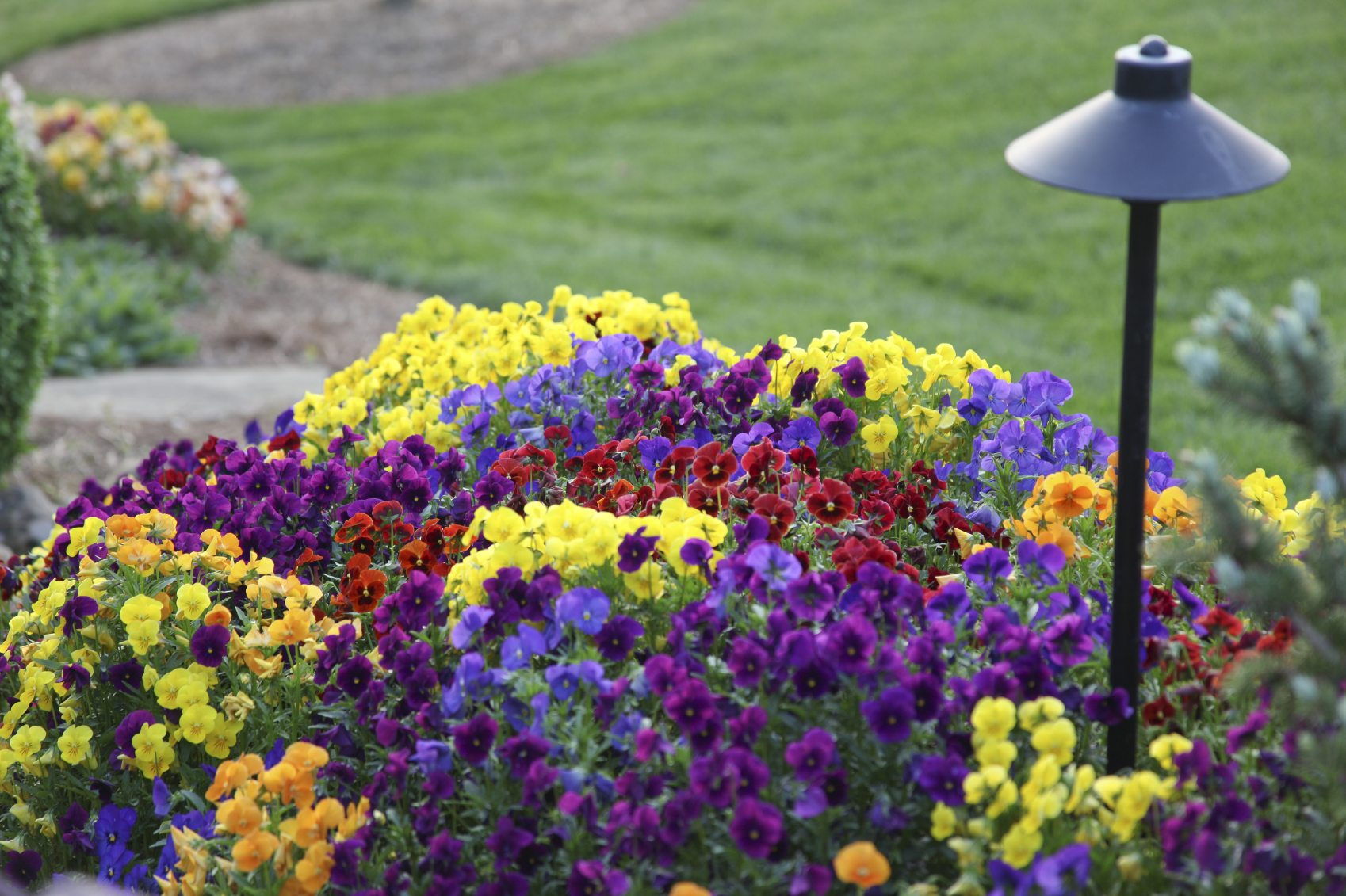 choosing annual flowers tips for growing annual gardens