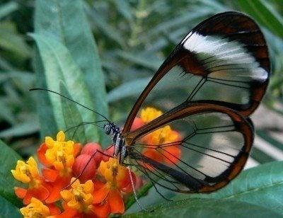 Butterfly Garden Design: Tips For Attracting Butterflies In Gardens