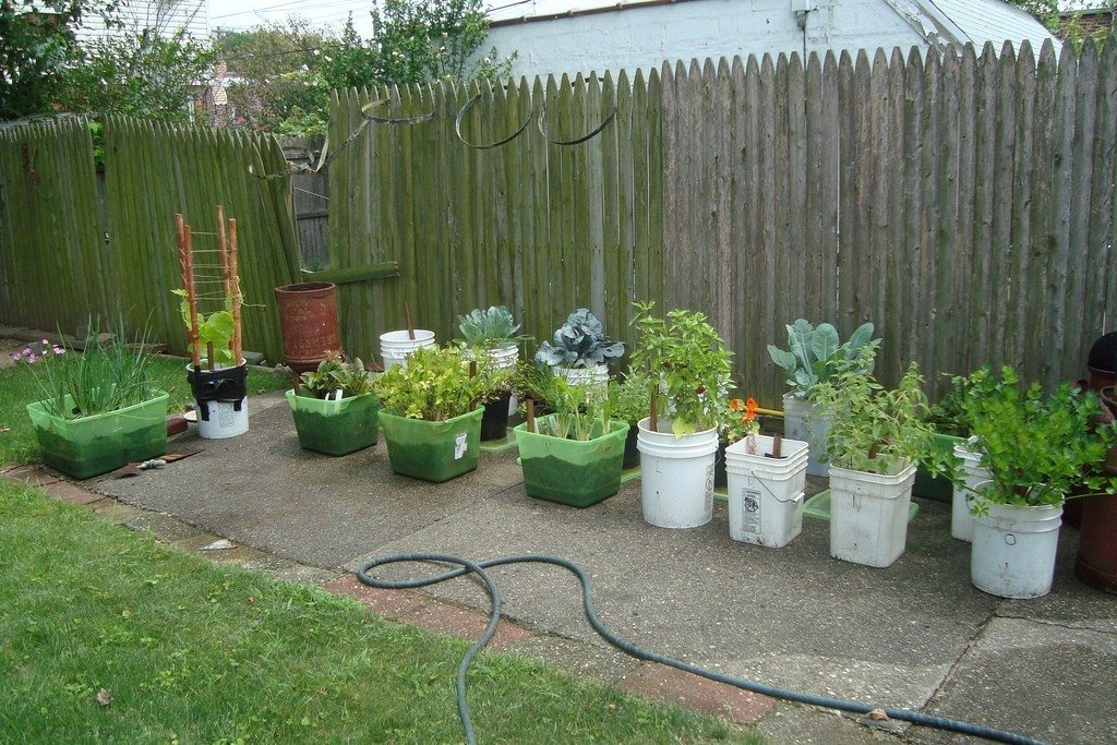 Container vegetable gardening the image - Container gardening ...