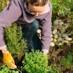 design-herb-garden