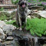 dog-in-garden