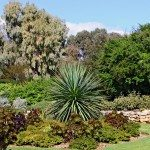 drought-tolerant-garden