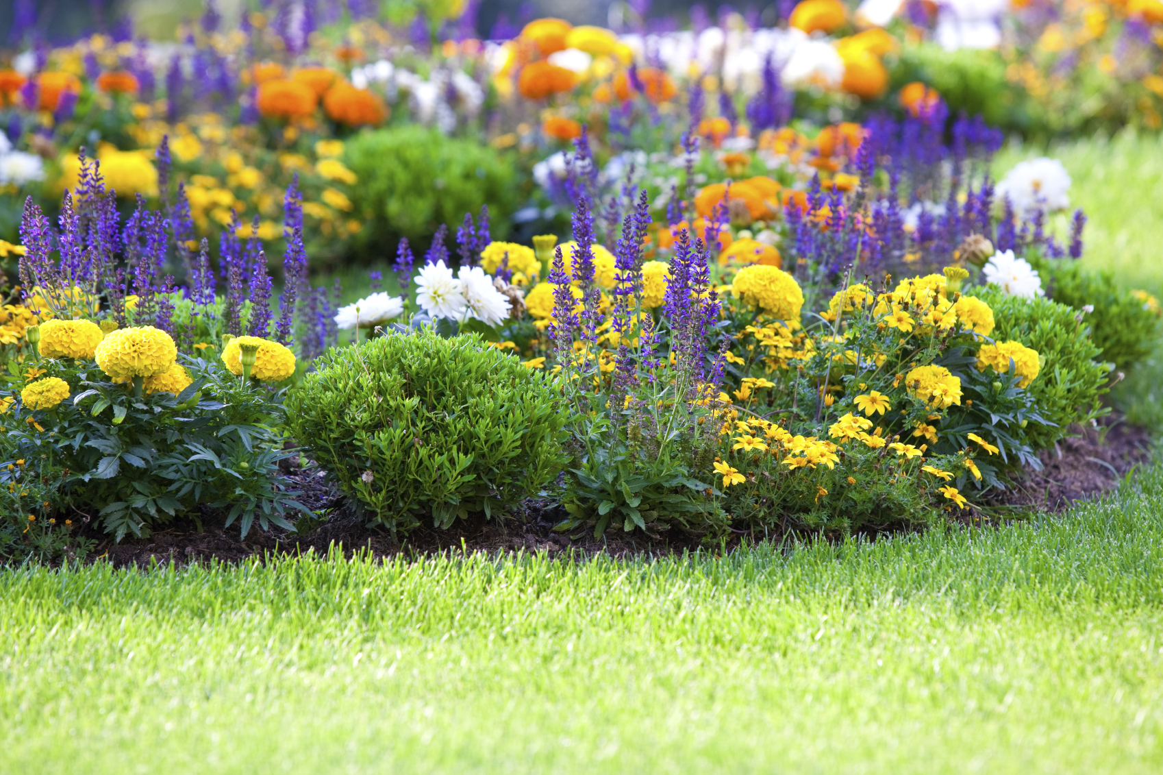 Flower gardening how to start a flower garden for Flower garden landscape