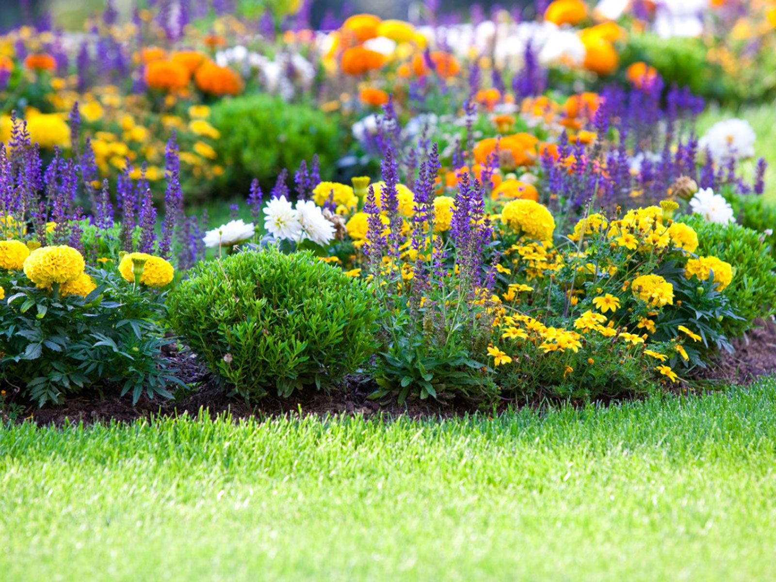 Flower Gardening How To Start A