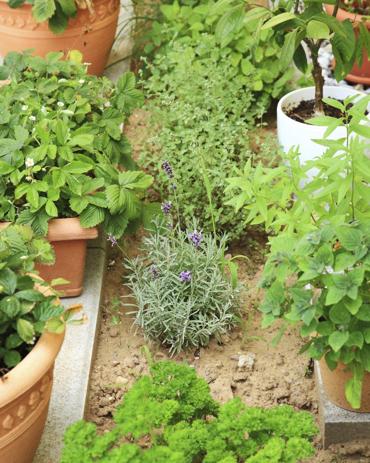 Balcony Fruit And Vegetable Garden