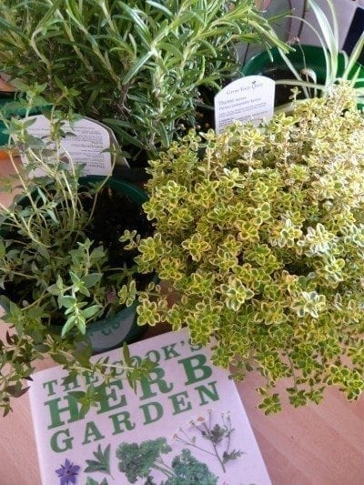 Garden Bush: General Herb Care Articles