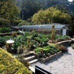 organic-garden-info
