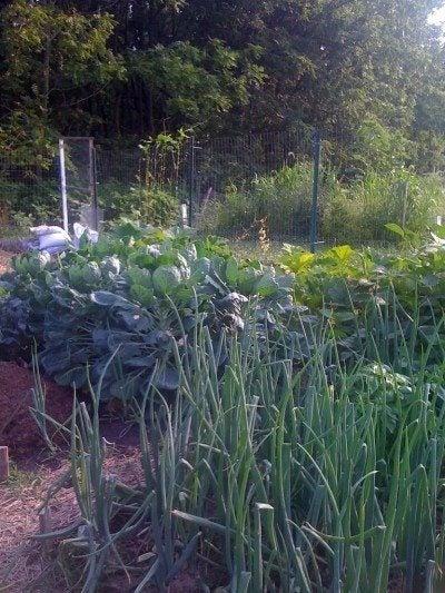 How to grow an organic garden