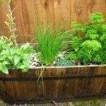 organic-herbs