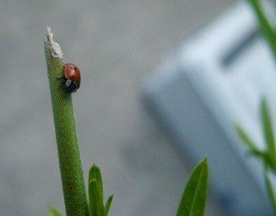 Natural pest control in an organic garden