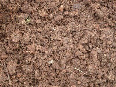 Organic garden soil: the importance of soil for an organic garden