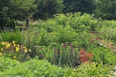 Perennial garden design tips for growing perennial flower gardens gardening with perennials how to design a perennial garden mightylinksfo