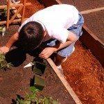 planting-vegetables