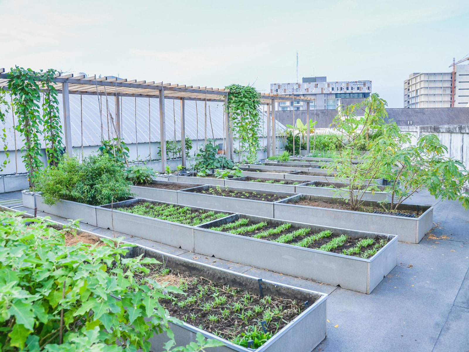 Roof Garden Design - How To Build A Rooftop Garden