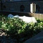 rooftop-gardening