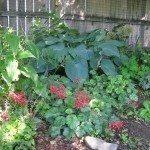 shade-gardening