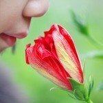 smelling-flower