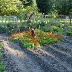 vegetable-garden-scarecrow
