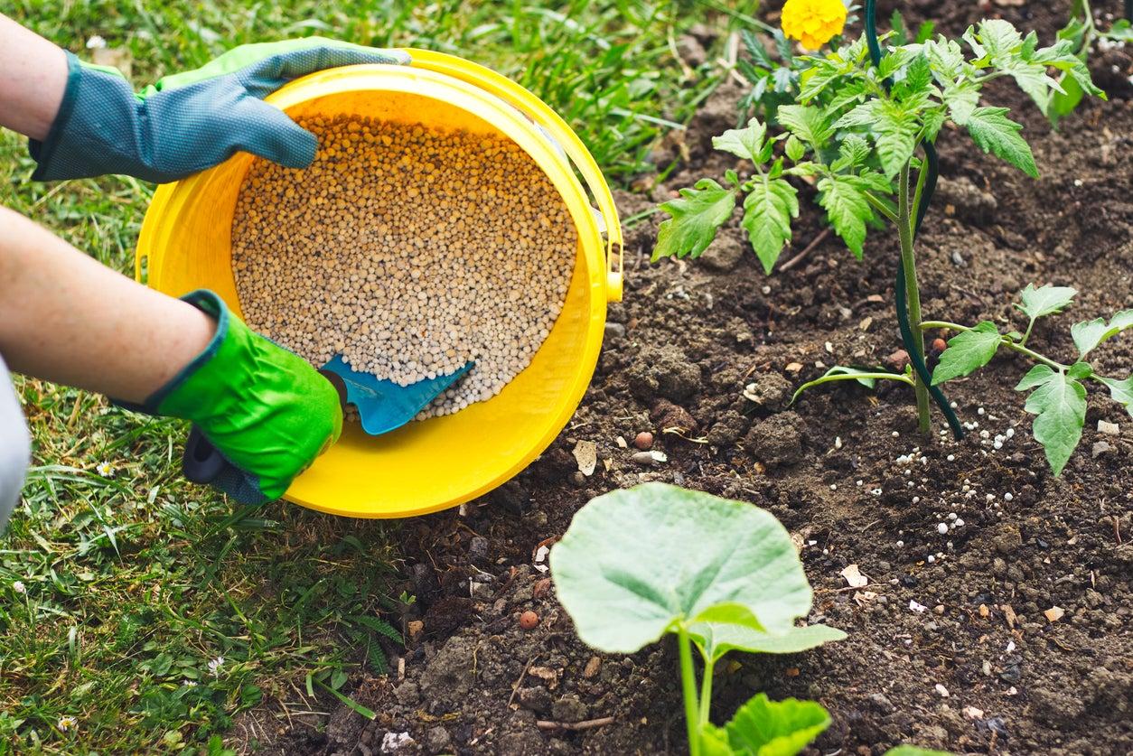 Vegetable Garden Fertilizers – Types Of Fertilizer For Vegetable Gardens