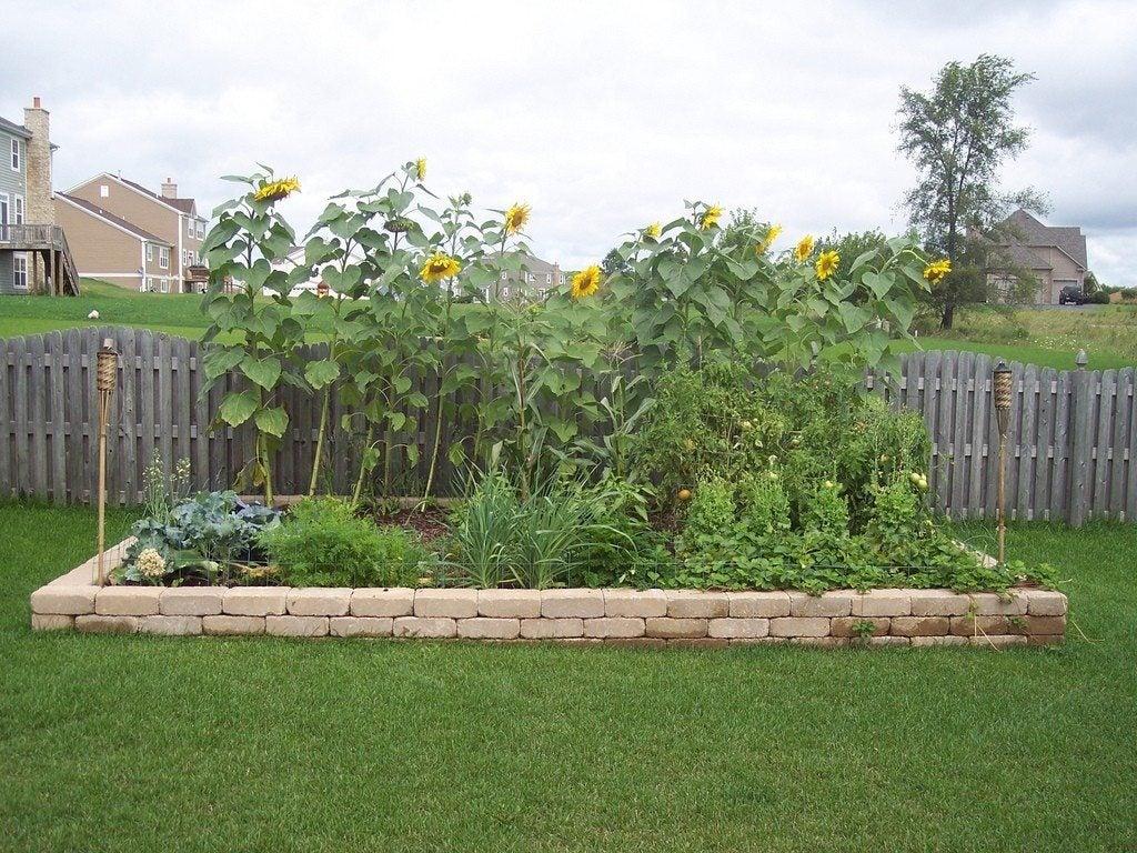 Image of: Vegetable Gardening Tips For Beginners