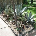 xeriscape-plant-grouping