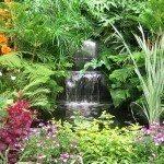 exotic plant garden
