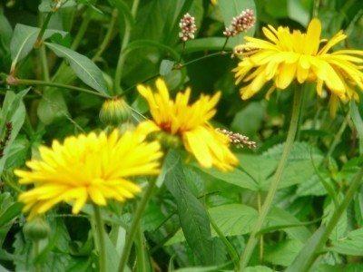garden-weed