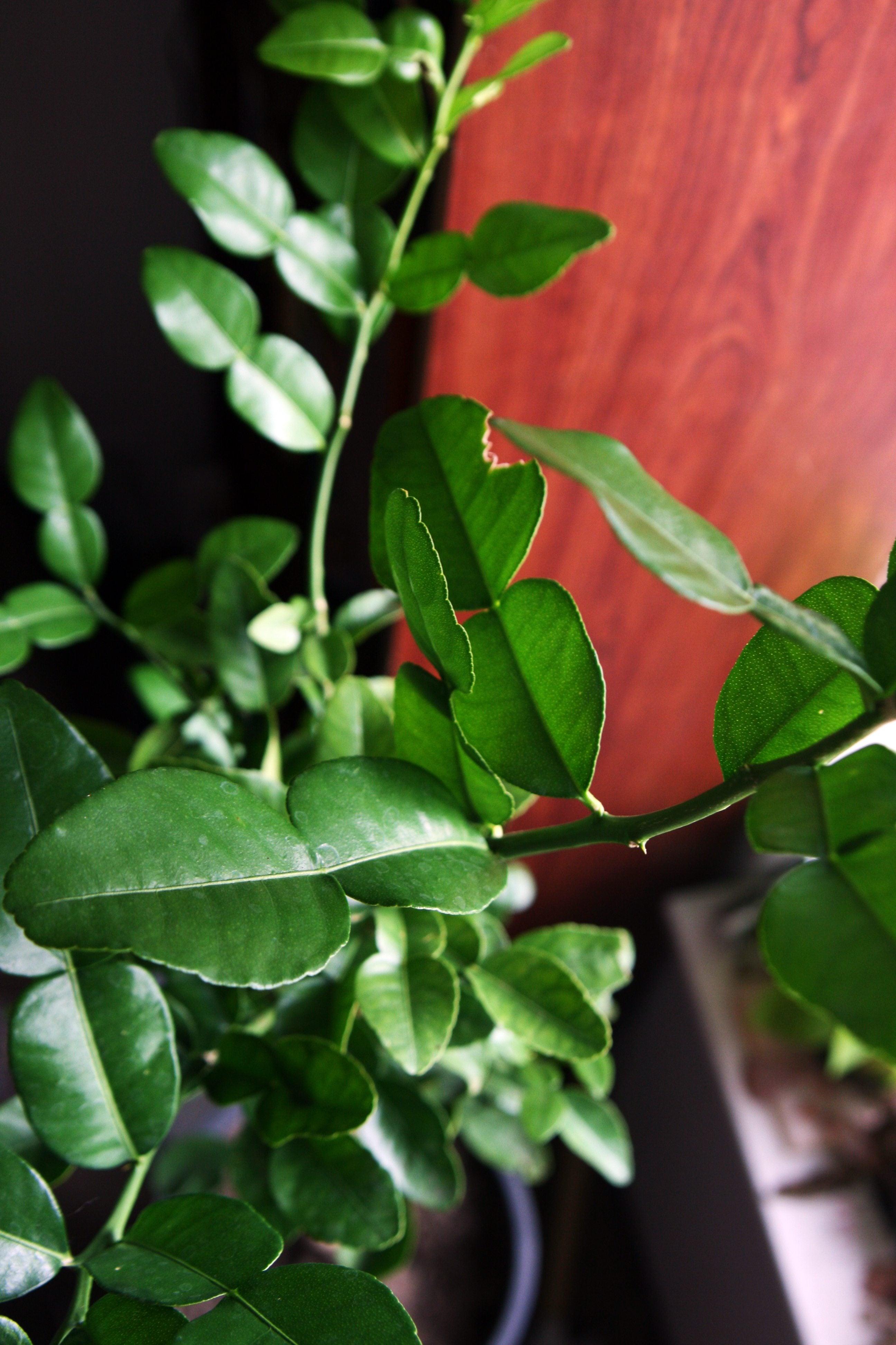 Rosemary Companion Plants