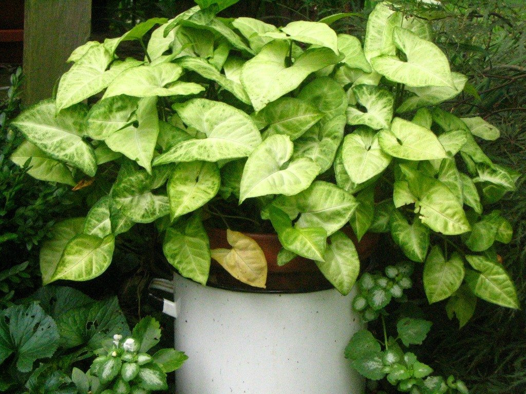 Moving indoor plants outside Images of indoor plants