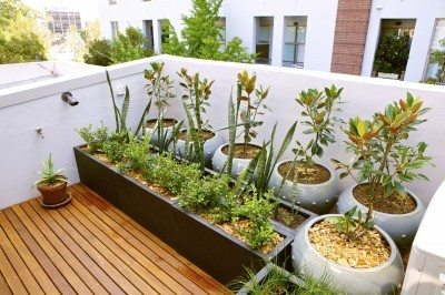 Creating A Rooftop Garden Design