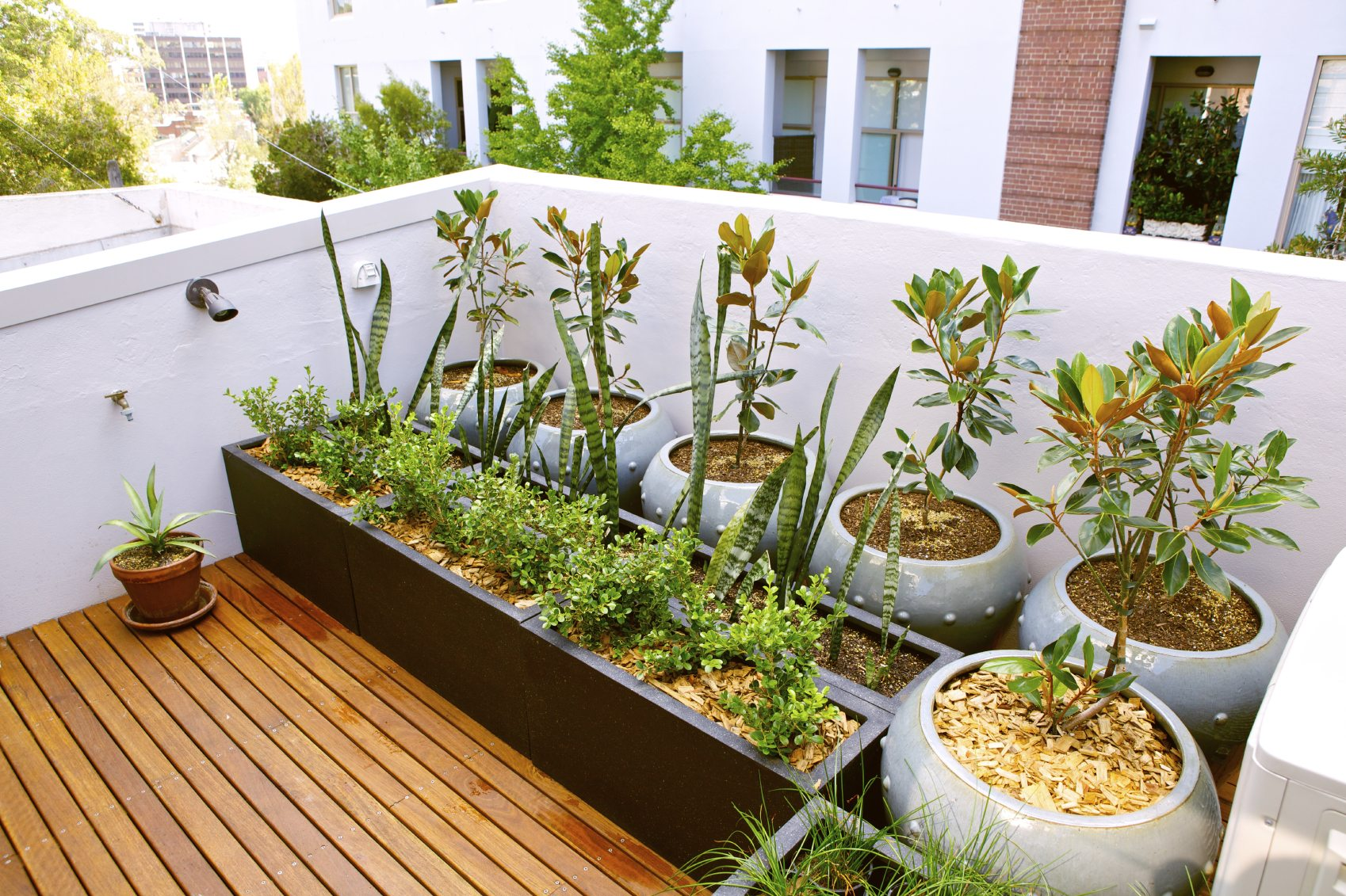 Rooftop gardening for city dwellers gardening know how for Terrazze arredate con piante