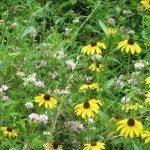 wildflowers2