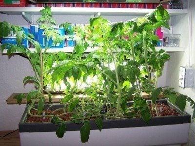 Hydroponic Gardening Indoors