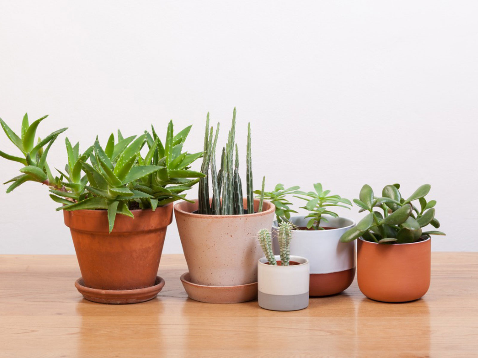 Growing Cactus And Succulent Plants Indoors