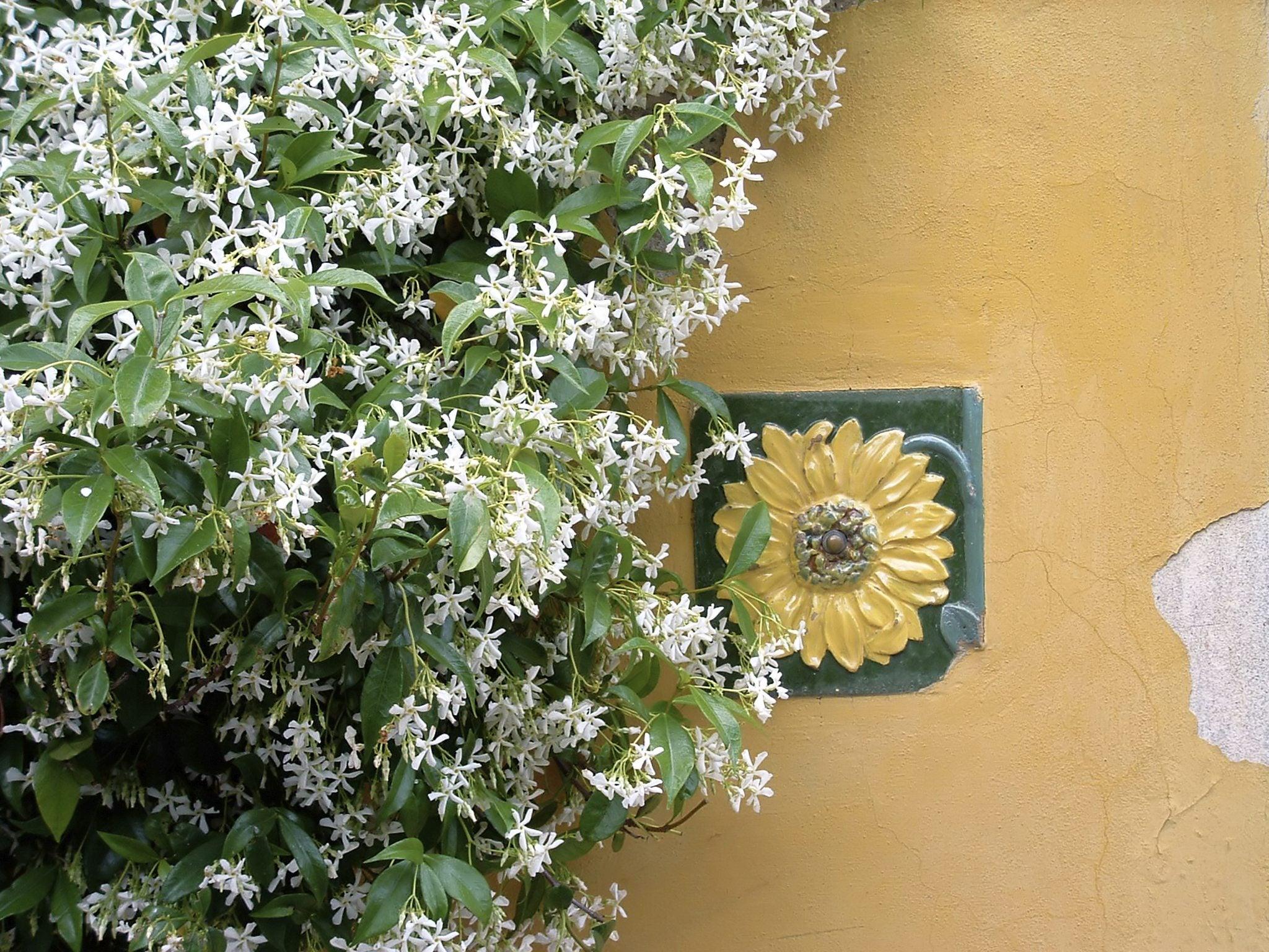 Tropical Flowering Vines Choosing Exotic Vines For The Garden