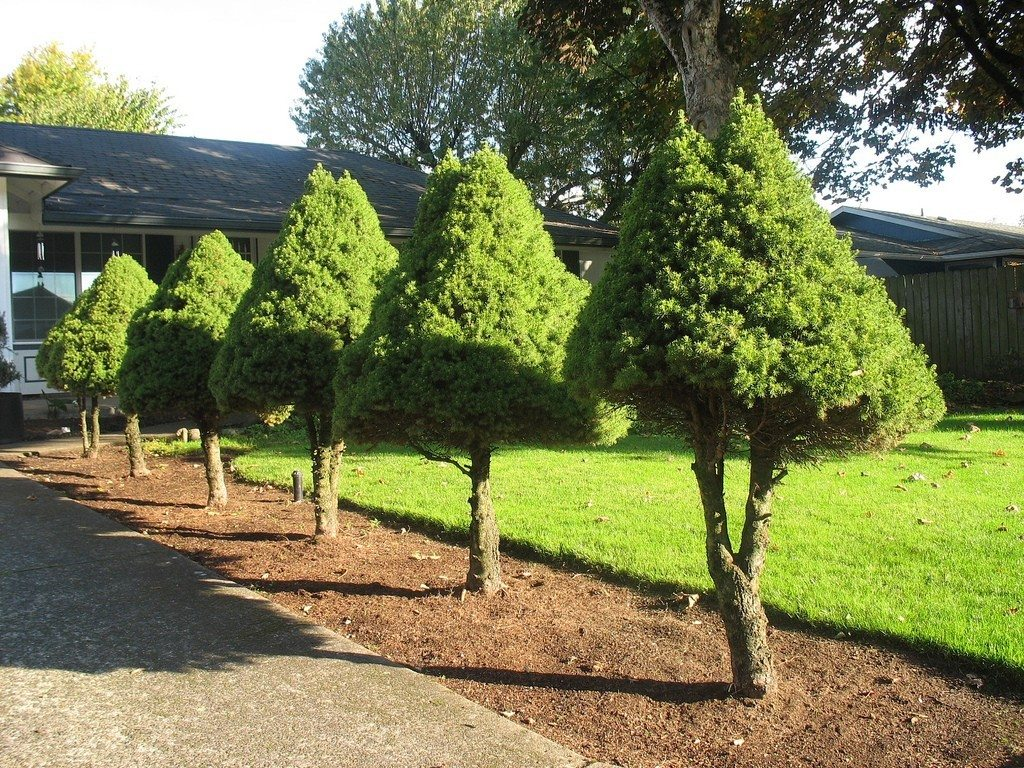 Good trees for the landscape for Trees that stay small