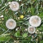 landscape-weeds