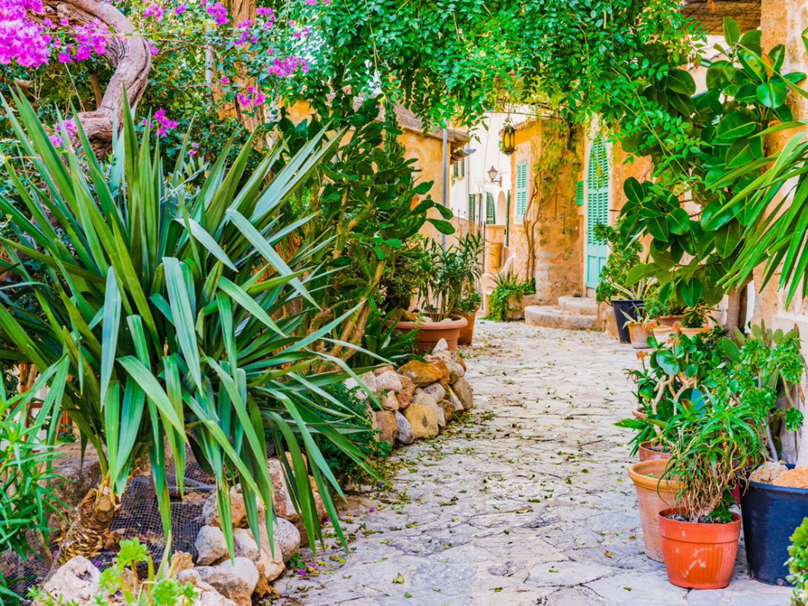 How To Create A Mediterranean Garden