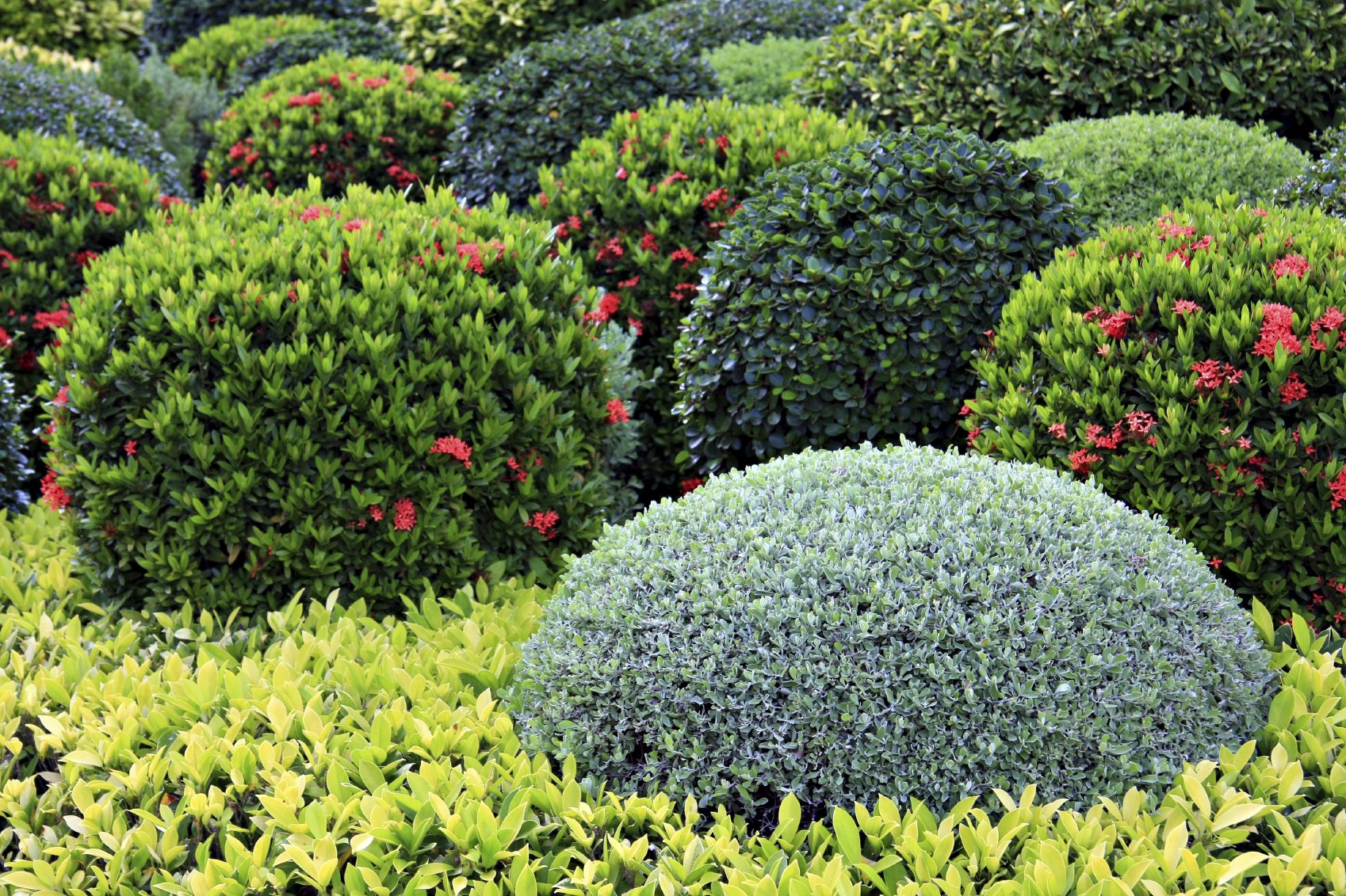 Learn about landscaping shrubs and their uses for Landscape flowers and plants