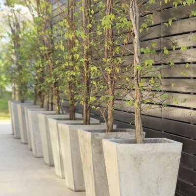 Growing Trees In Containers