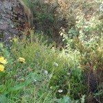 weedy-garden