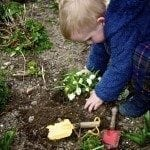 Little Boy Planting A Plant In The Garden