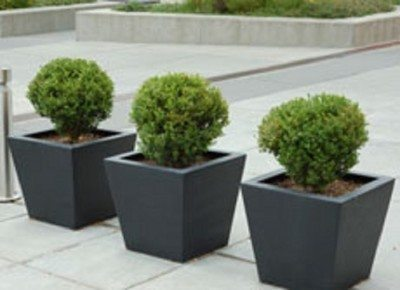 container-shrubs