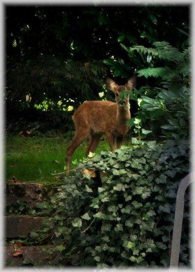 Animals, Wildlife, and Garden Pests