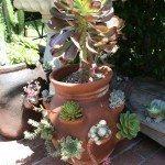 jar-garden