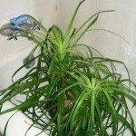 plants tub