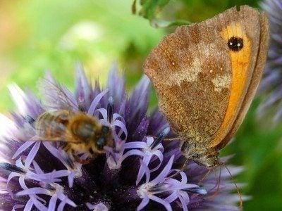 Pollinator gardens: creating a pollinator garden