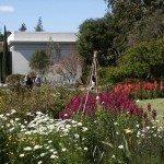 wildflower-garden2